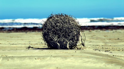 boss-fight-free-high-quality-stock-images-photos-photography-ocean-sand-weed-500x281