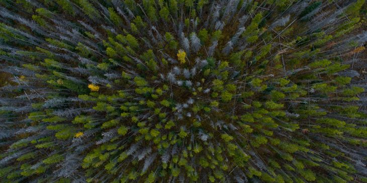 boss-fight-free-high-quality-stock-images-photos-photography-forest-overhead